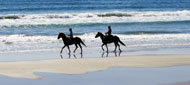 Equine Tourism Exams