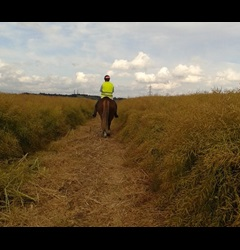 Vanessa Woodhead riding through freshly mowed oil seed rape crop