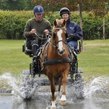 Have a go at Carriage Driving