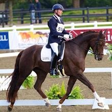 Training the Dressage Horse
