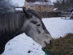 Caring for Horses through Winter Talk