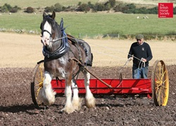 working horses 16 plough
