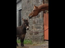 Donkey and Horse over stable welfare 2016