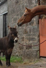 Donkey and Horse over stable Welfare conference 2016 Scotland