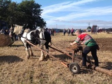 Working Horse 2015 Forestry