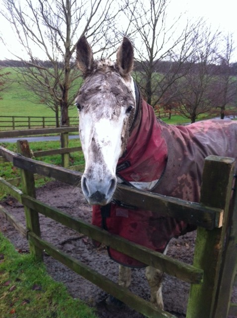 Alison Clayton's rather muddy mare!