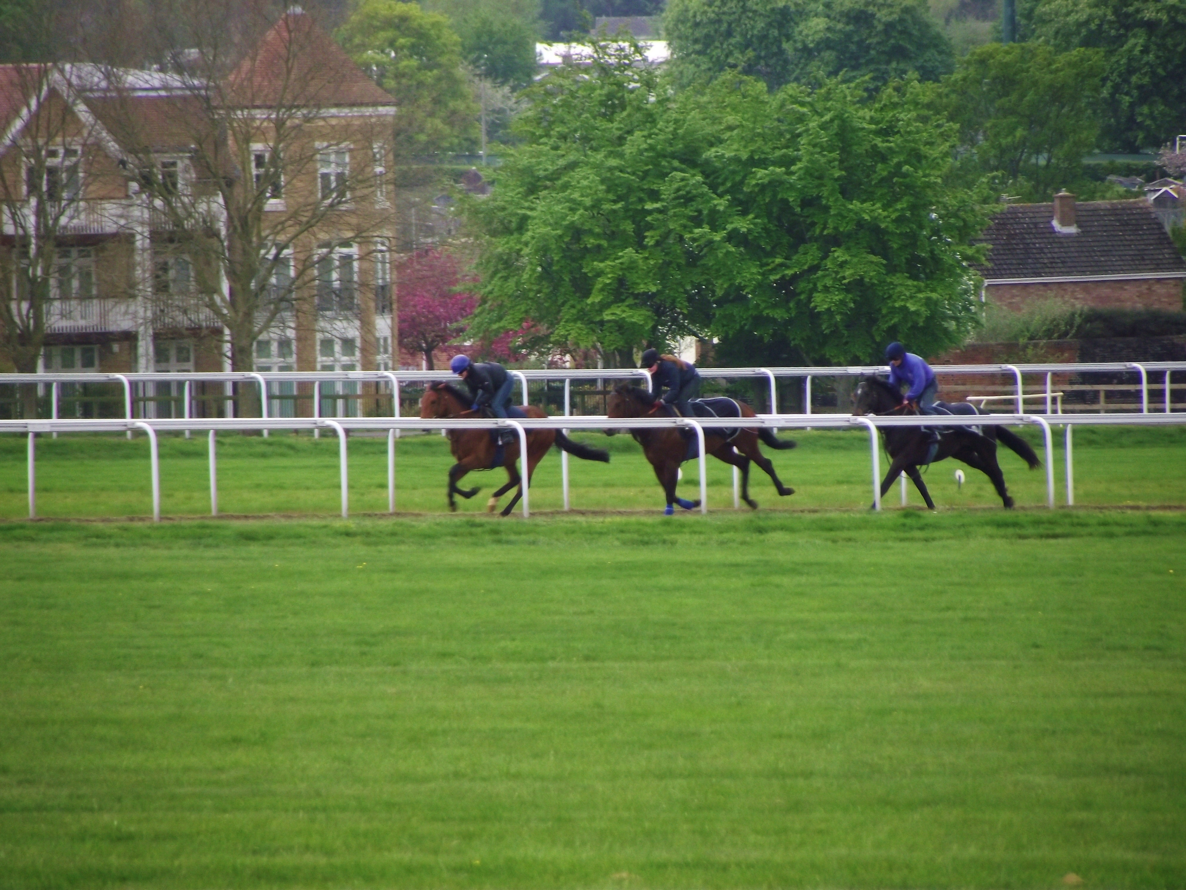 A brisk canter on Moulton Road gallops