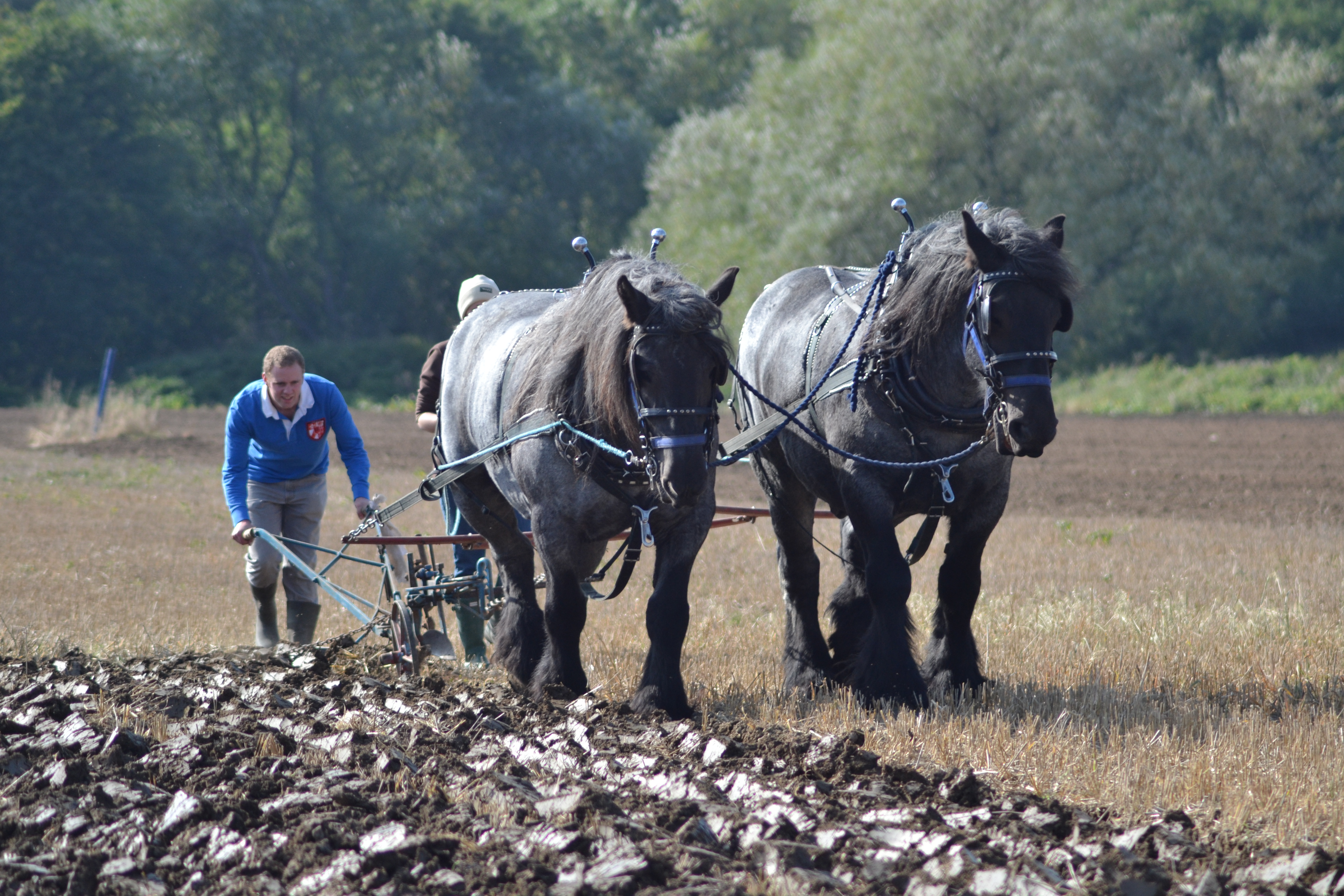 Annie and Casper ploughing