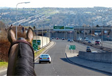 A horse on a motorway: is this what access in the future will look like?