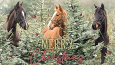Image for Meet the stars of our 2020 Christmas Card, 'Three Wise Horses'