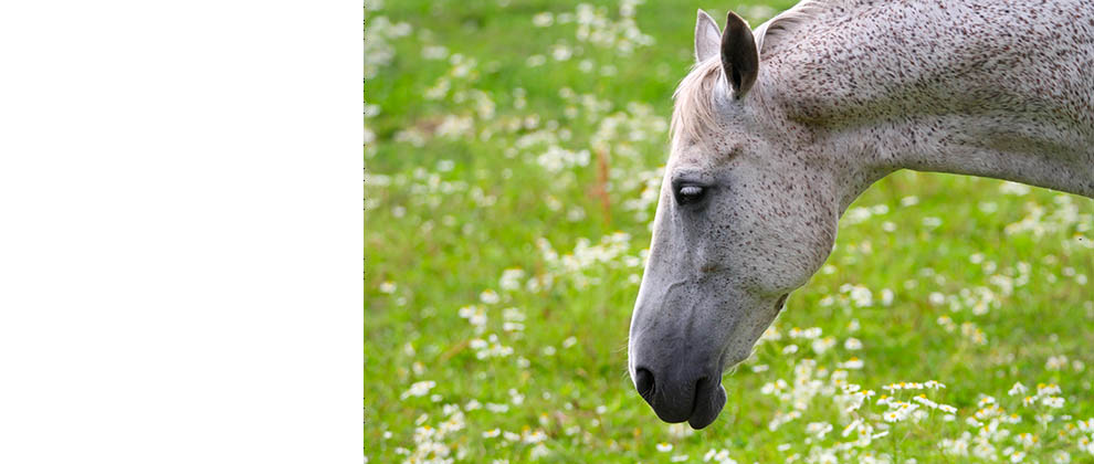 equine herpes web banner