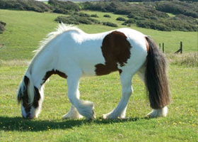 equine pasture management